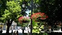 106 висящи кошници с цветя украсиха пешеходната зона на Пловдив