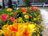 2 000 000 пролетни цветя разцъфтяха в Пловдив