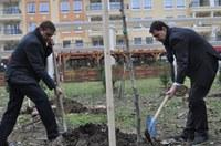 """30 нови чинара засадиха в парк """"Отдих и култура"""""""