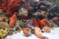 Нова зала с акули и екзотични риби откриха в Природонаучния музей в Пловдив