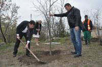 Засаждат 2000 нови дървета в Пловдив